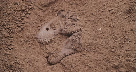 kopat : Dinosaur fossil unearthed