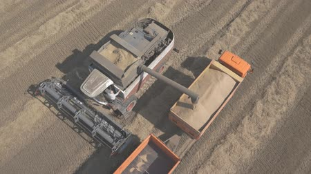 reaping : Process of unloading grain from combine to harvest in back of a truck. Stock Footage