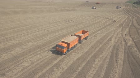 A truck with two trailers loaded with wheat, traveling across field.
