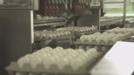 Automatic loading of eggs on conveyor by means of suction cups.