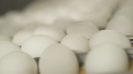 Conveyor belt with white eggs closeup.