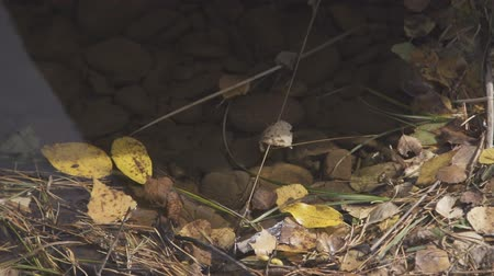 Gray stones lie under shallow water surrounded by dry leaves and yellow needles.