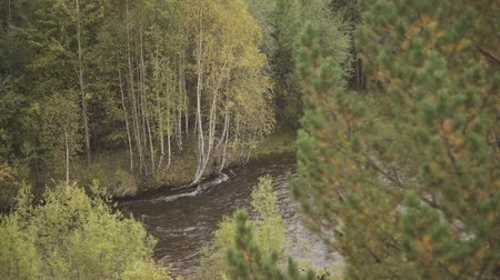 Pine and osier branches in the forest with river landscape Vídeos