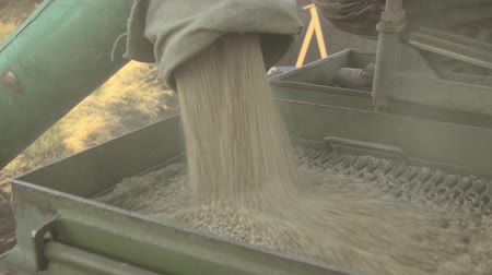 Unloading grain into hopper car for storage and supply of seeds closeup.