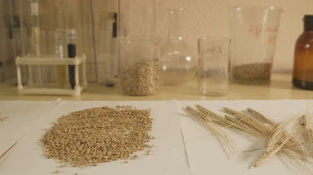 Laboratory glassware on table with samples of grain crops.