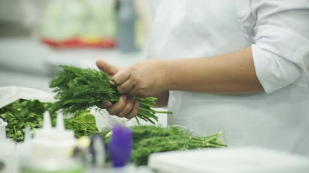 erva doce : Cook in a white apron, choose a good dill and gathers in her hand.