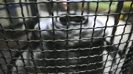 grating : Coil with metal wire rotates behind grate on machine. At factory machine works from which rods come out for production of product.