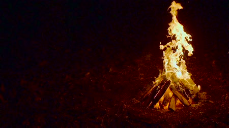 noite : Outdoor wood campfire burring brightly at night forest with sparks