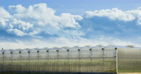 fumier : Timelapse des nuages ??Moving Ower Greenhouse. Big Clouds Vidéos Libres De Droits