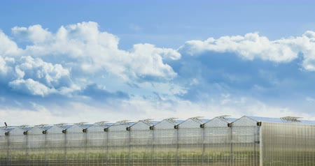 kertészeti : Timelapse of Big Clouds Moving Ower Greenhouse.