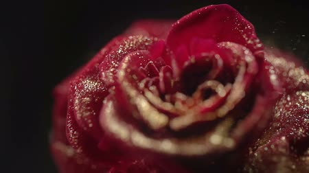 диоксид : Close Up of Red Frozen Rose With Golden Sequins. Nitrogen Ice on Rose