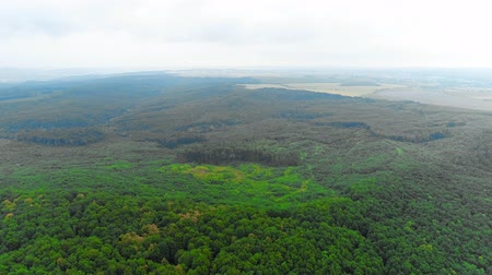 Aerial view of moving forward to woods forest and mountain valley with mist high in the sky. 4K.