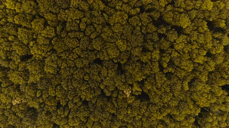 Aerial view of dense mixed forest. 4K.