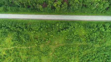 грузовики : Aerial view of car rides on the road between plants of green forest. 4K.