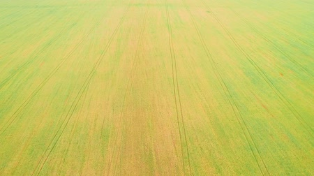 celkový : Aerial view of yellow and green field background. 4K.