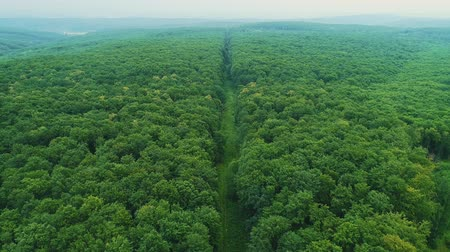 Aerial view of seamless transition of dense forest growth and a long footpath in the middle of it. Stock mozgókép