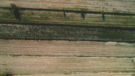 Aerial view of ploughed field in the large farm. 4K. Stock mozgókép