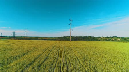 Aerial view of broad fiels with crops and electric poles in rural area. 4K. Stock mozgókép