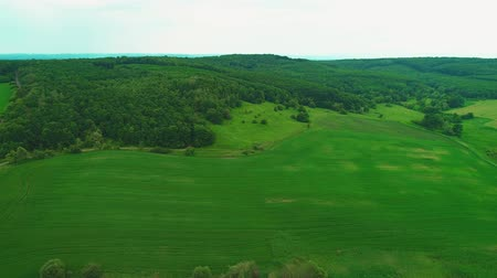 yoğun : Aerial view, circling above vivid green fields. Thick-set forest. Copy space. 4K. Stok Video