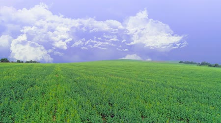 fértil : Aerial view of vivid green field. Lavender sky with fluffy white clouds. Copy space. 4K. Vídeos