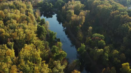 Orbital aerial drone video around small long lake with autumn trees Wideo