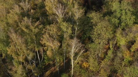 Orbital aerial drone video around autumn trees in the park