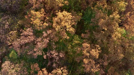 Early autumn forest directry from above