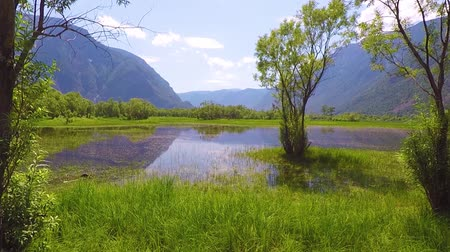 swamp : Lake Teletskoe. Altai mountains Siberia Russia.