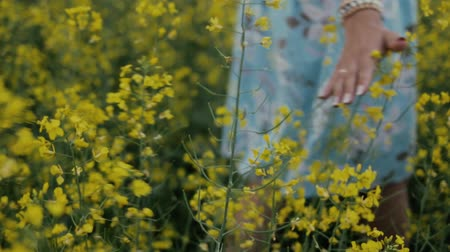 rape : A beautiful young girl dressed in a blue dress walks thoughtfully across a field of yellow flowers. He touches flowers with his hands. Smiles and laughs Stock Footage