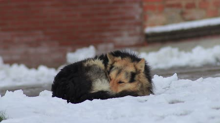 Homeless dog freezes on the snow near the building close-up