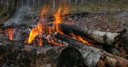 Logs burn in the bonfire in deep forest, close-up view