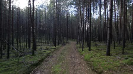 Running in deep forest on path pov shot Wideo