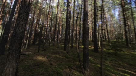 испуг : Simulation of scared escape running in the deep forest POV shot