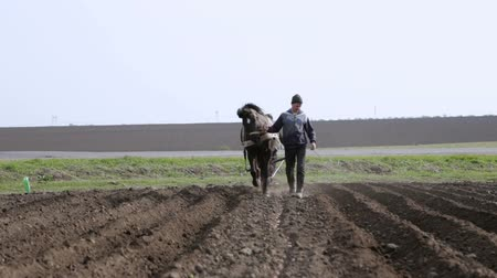 livestock sector : Buchach, Ukraine - 26 April 2017: Plowing the field with a horse in a field
