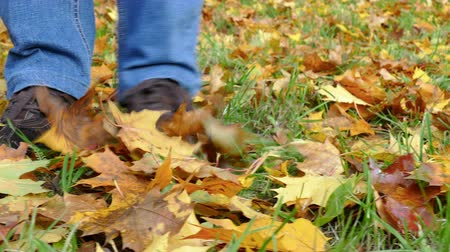 prezentaci : Someone is collecting autumn leaves in a park