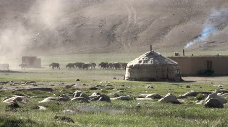pamirs : Yaks are led away from a yurt camp in the Pamir ranges. Stock Footage