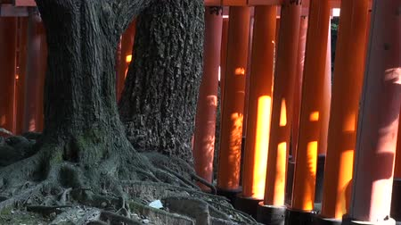 размышлять : Torii gates in the forests of Kyoto.