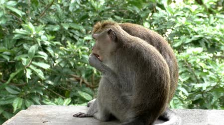 vida selvagem : Monkey eating a fruit