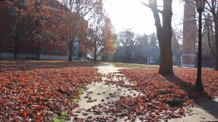 kafeterya : Still shot of red leaves on ground and walkway at university on sunny day