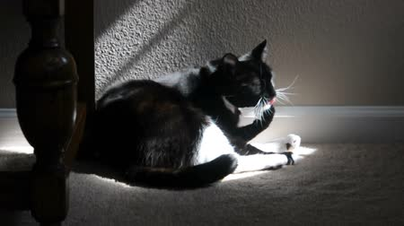 ronronar : A cat bathes itself in the sun