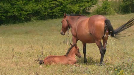 potro : horse and foal in the pasture - farm animals