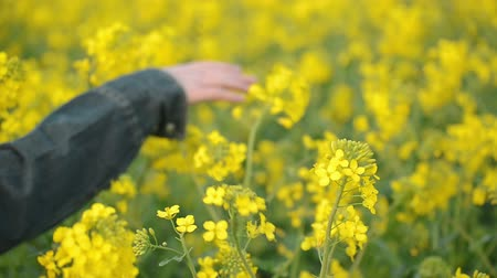 koruma : Hand of Female Farmer in Oilseed Rapeseed Cultivated Agricultural Field Examining and Controlling The Growth of Plants Crop Protection Agrotech Concept