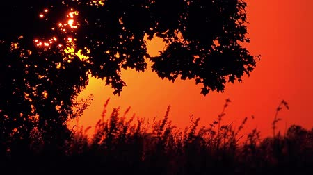 večer : Silhouette of Lonely Tree on Open Countryside Field in Magical Vibrant Orange Sunset