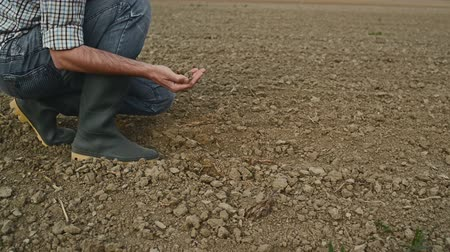 toprak : Farmer Checking the Quality of Fertile Soil Ground with Hands on Fertile Agricultural Farm Land before Seeding Season Stok Video