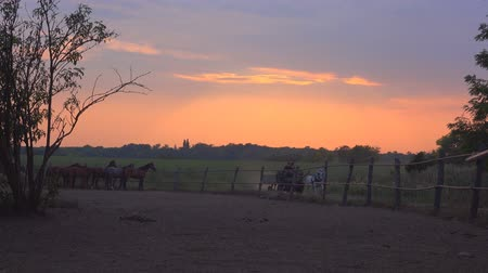 sáně : Two unrecognizable people riding horse carriage and passing by the horse ranch farm in sunset, 4k uhd footage.