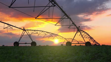 irrigação : Automated farming irrigation sprinklers system on cultivated agricultural landscape field in sunset Vídeos