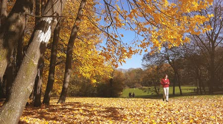 проливая : Woman walking in the park and using mobile smartphone, shedding autumn leaves falling from the trees, beautiful fall season scenery.