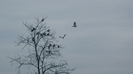 испуг : Flock of frightened birds flying away from bare treetop, pigeons and doves on tree branches scared by