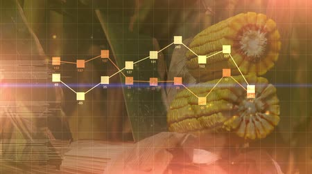 plodina : Corn crop harvest abstract infographics diagram animation, agricultural business results presentation background.