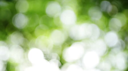 blur : Dreamy abstract natural bokeh background, blur green backdrop